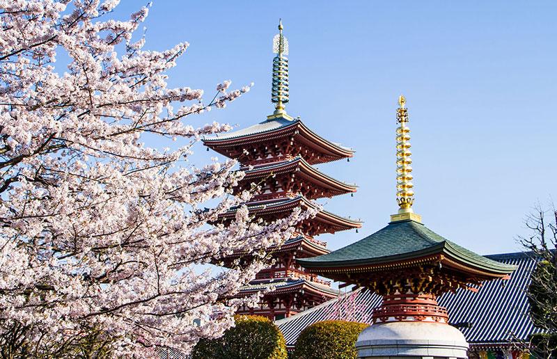 ULTRA PROMO JAPONYA & KORE 2021 ( THY SEFERİ İLE)